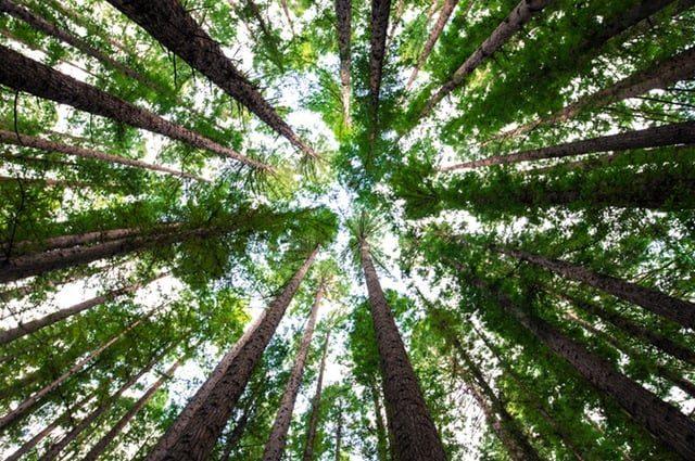 Frosinone, Urban Forestry finanziato dalle sanzioni da danno ambientale.